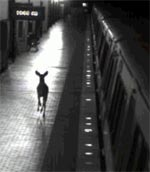 metro-deer.jpg